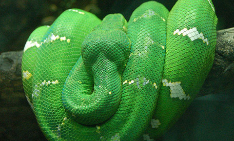 Alabama Non Venomous Snakes http://www.emirates247.com/news-in-images/10-most-amazing-snakes-2011-09-07-1.417188