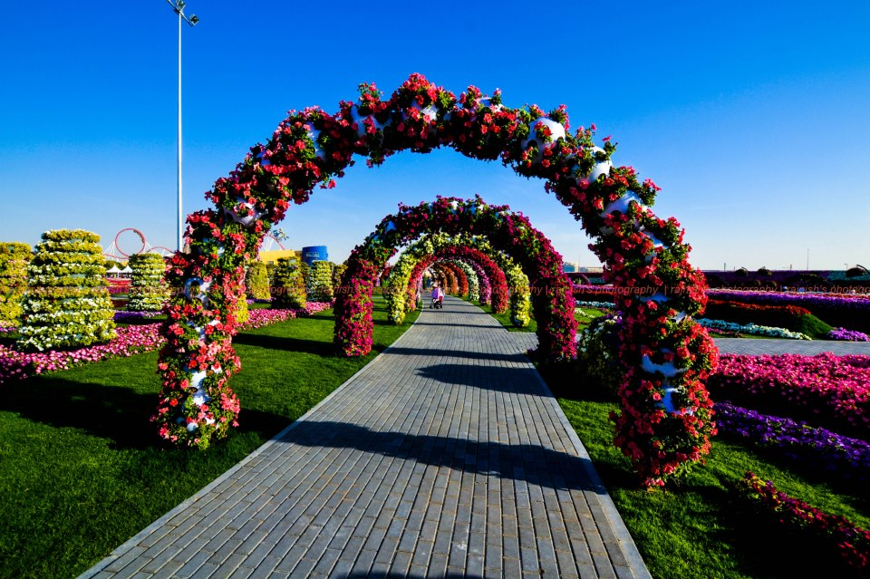 Kemmannu.com | Dubai's Miracle Garden opens today with ...