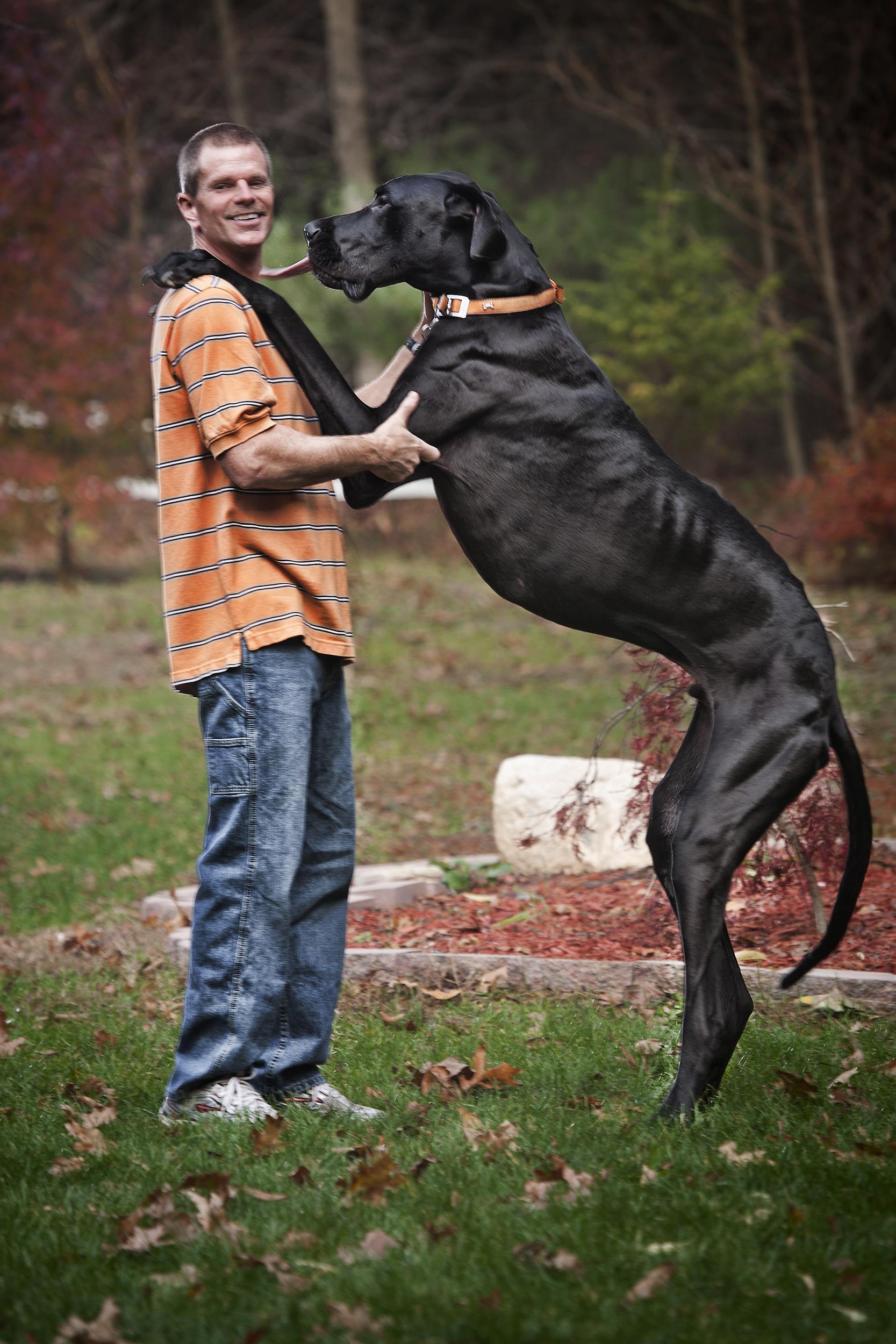 Член пса вошел 21 фотография