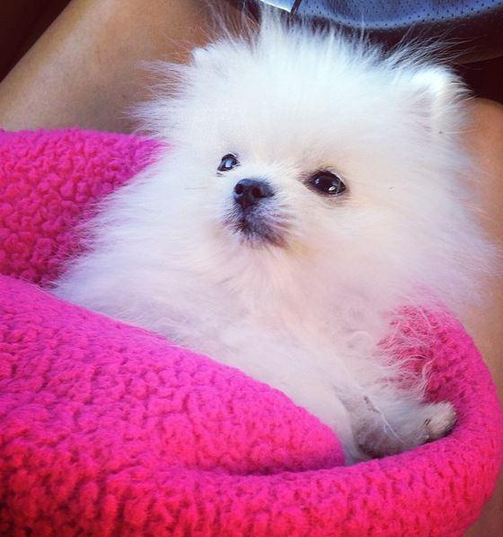 Paris Hilton names her $13,000 dog: Prince Hilton - Emirates24 7