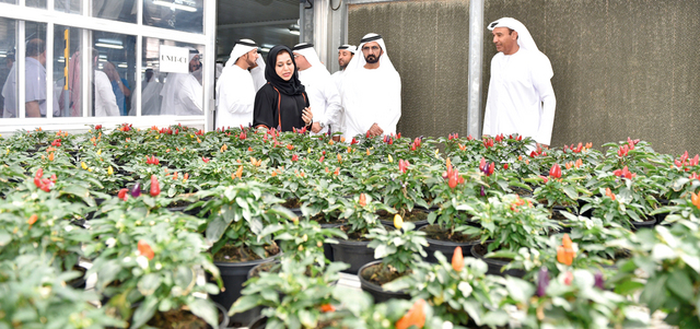 Lootah Said The Warsan Nursery Can Provide Seasonal And Sustainable Flower Seedlings Through A Large Production Capacity That Amounts To 70 Million