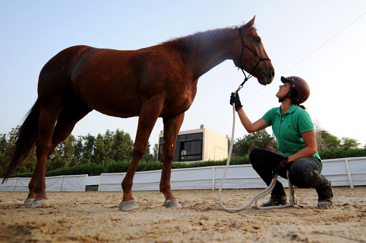From the Tack Room: Counter-Canter & Counter-Banter ... |Horse Training