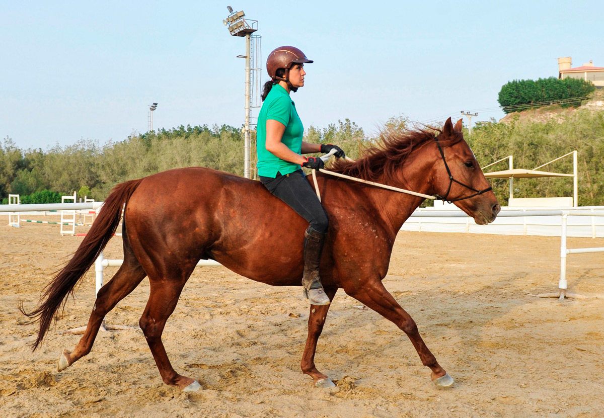 How to Become a Horse Trainer: Salary, Career & Education ... |Horse Training